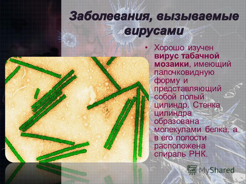Хорошо изучен вирус табачной мозаики, имеющий палочковидную форму и представляющий собой полый цилиндр. Стенка цилиндра образована молекулами белка, а в его полости расположена спираль РНК.