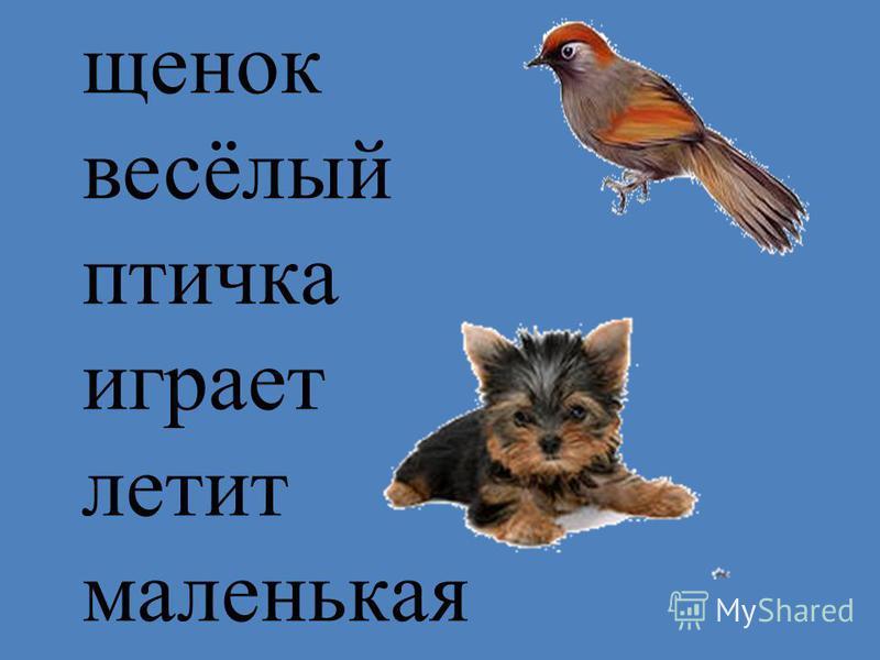 щенок весёлый птичка играет летит маленькая