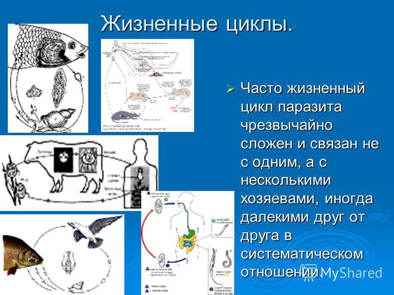 Жизненные циклы. Часто жизненный цикл паразита чрезвычайно сложен и связан не с одним, а с несколькими хозяевами, иногда далекими друг от друга в систематическом отношении. Часто жизненный цикл паразита чрезвычайно сложен и связан не с одним, а с нес