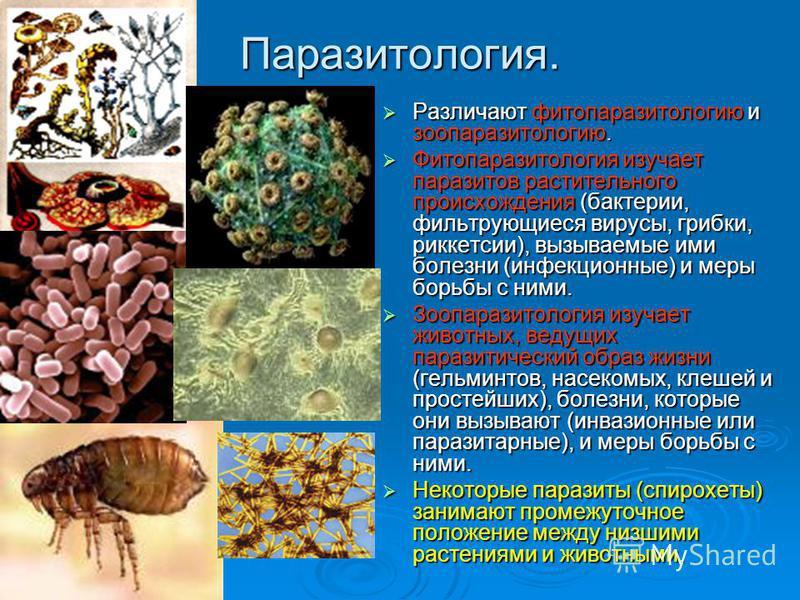 Паразитология. Различают фитопаразитологию и зоопаразитологию. Различают фитопаразитологию и зоопаразитологию. Фитопаразитология изучает паразитов растительного происхождения (бактерии, фильтрующиеся вирусы, грибки, риккетсии), вызываемые ими болезни