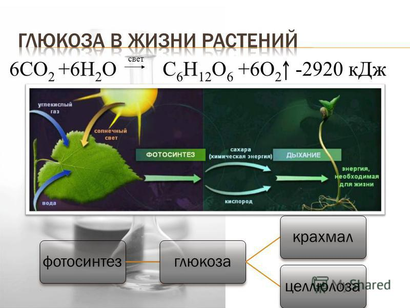 фотосинтез глюкоза крахмал целлюлоза свет 6CO 2 +6H 2 O С 6 Н 12 О 6 +6О 2 -2920 к Дж