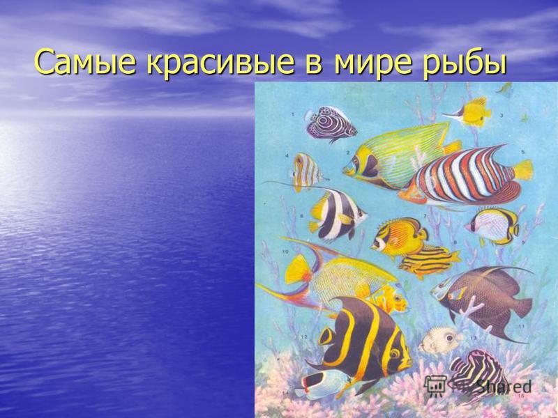 Самые красивые в мире рыбы