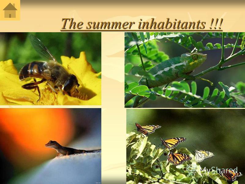 The summer inhabitants !!! The summer inhabitants !!!