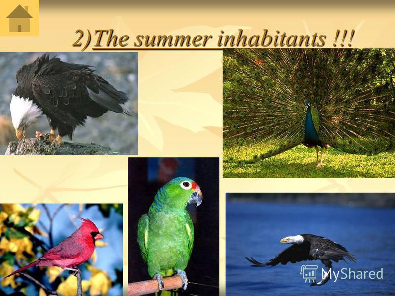 2)The summer inhabitants !!! 2)The summer inhabitants !!!