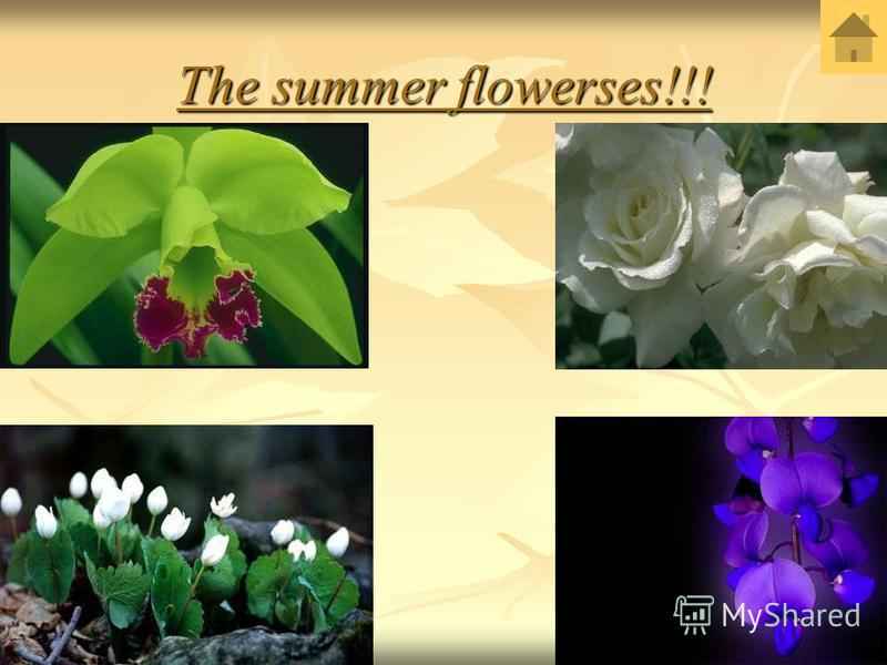 The summer flowerses!!!
