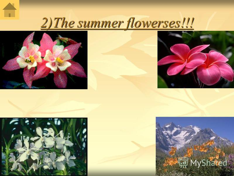 2)The summer flowerses!!!