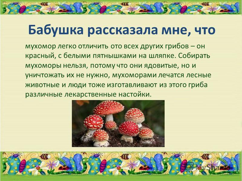 Бабушка рассказала мне, что мухомор легко отличить ото всех других грибов – он красный, с белыми пятнышками на шляпке. Собирать мухоморы нельзя, потому что они ядовитые, но и уничтожать их не нужно, мухоморами лечатся лесные животные и люди тоже изго