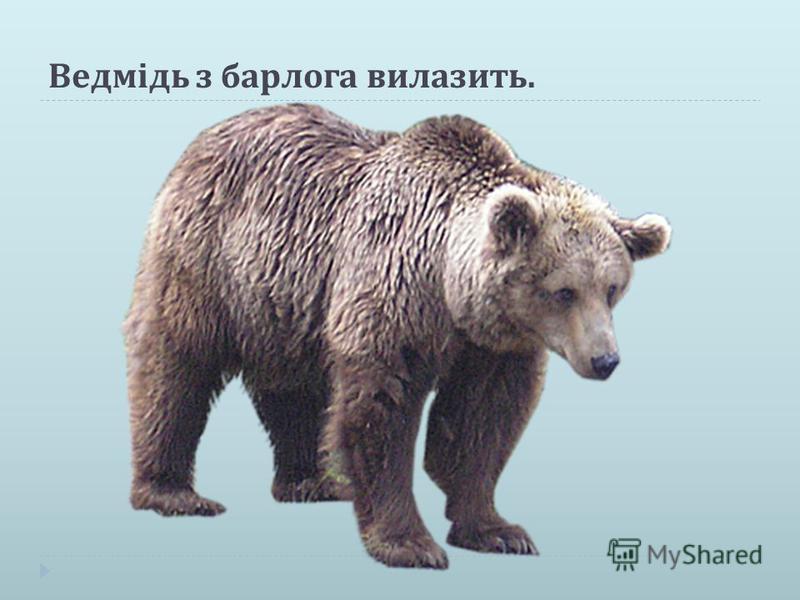 Ведмідь з барлога вилазить.