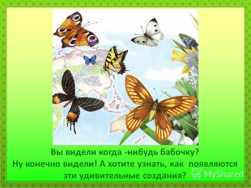 Вы видели когда -нибудь бабочку? Ну конечно видели! А хотите узнать, как появляются эти удивительные создания?