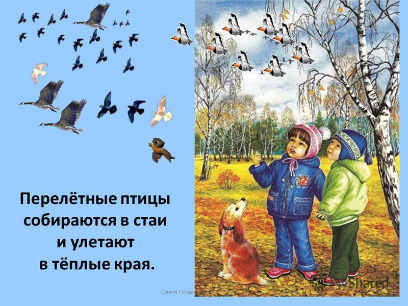 Слета Полина Вениаминовна Перелётные птицы собираются в стаи и улетают в тёплые края.
