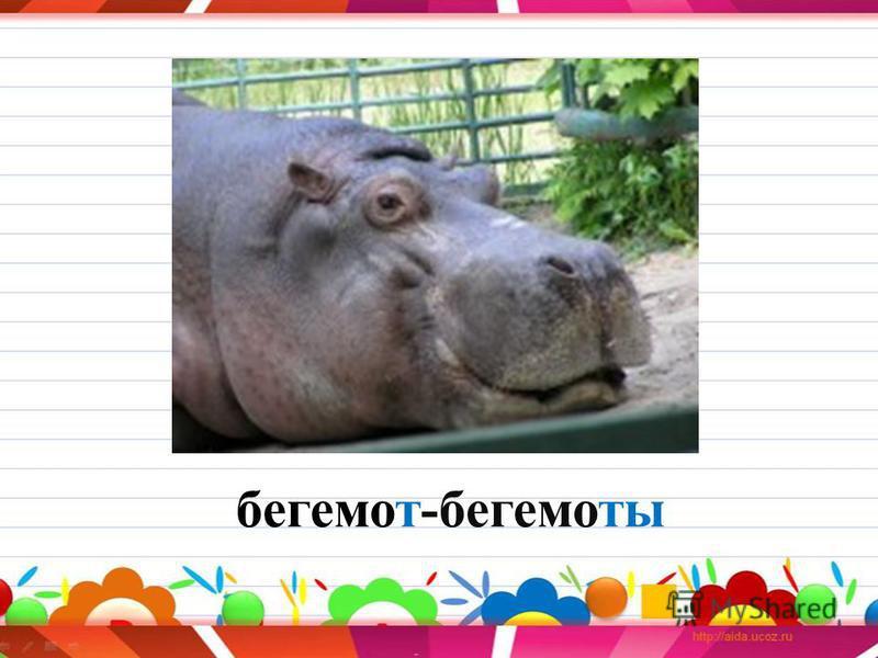 бегемот-бегемоты