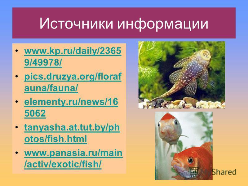www.kp.ru/daily/2365 9/49978/www.kp.ru/daily/2365 9/49978/ pics.druzya.org/floraf auna/fauna/pics.druzya.org/floraf auna/fauna/ elementy.ru/news/16 5062elementy.ru/news/16 5062 tanyasha.at.tut.by/ph otos/fish.htmltanyasha.at.tut.by/ph otos/fish.html