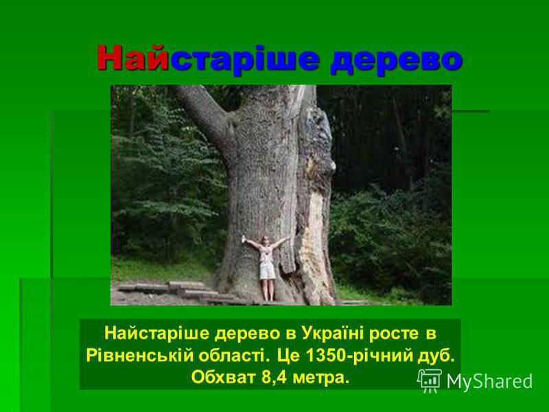 Найстаріше дерево Найстаріше дерево в Україні росте в Рівненській області. Це 1350-річний дуб. Обхват 8,4 метра.