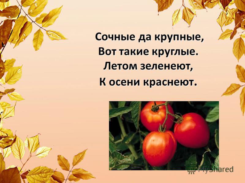 Сочные да крупные, Вот такие круглые. Летом зеленеют, К осени краснеют. Сочные да крупные, Вот такие круглые. Летом зеленеют, К осени краснеют.