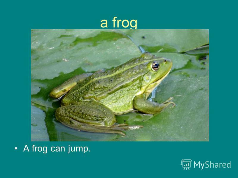 a frog A frog can jump.