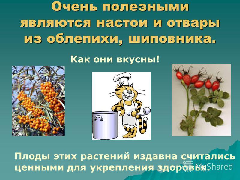 Очень полезными являются настои и отвары из облепихи, шиповника. Плоды этих растений издавна считались ценными для укрепления здоровья. Как они вкусны!