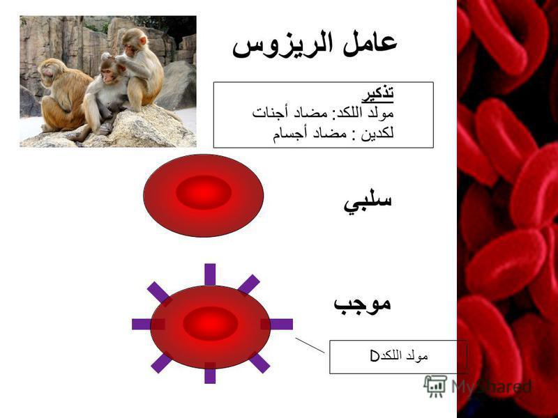 عامل الريزوس موجب مولد اللكد D سلبي تذكير مولد اللكد : مضاد أجنات لكدين : مضاد أجسام