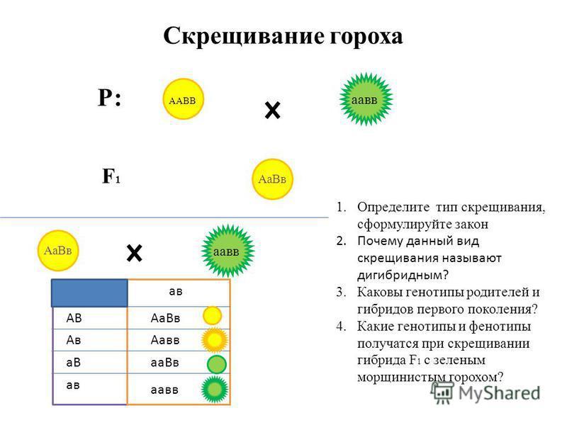 Скрещивание гороха Р: F1F1 1. Определите тип скрещивания, сформулируйте закон 2. Почему данный вид скрещивания называют дигибридным? 3. Каковы генотипы родителей и гибридов первого поколения? 4. Какие генотипы и фенотипы получатся при скрещивании гиб