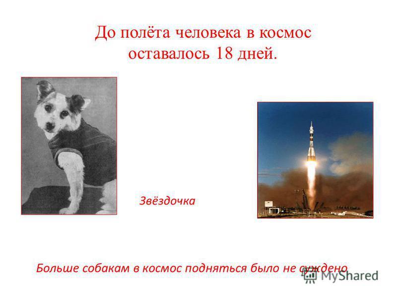 Больше собакам в космос подняться было не суждено До полёта человека в космос оставалось 18 дней. Звёздочка