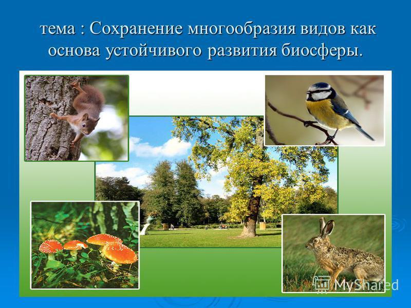 тема : Сохранение многообразия видов как основа устойчивого развития биосферы. тема : Сохранение многообразия видов как основа устойчивого развития биосферы.