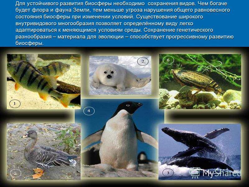 Для устойчивого развития биосферы необходимо сохранения видов. Чем богаче будет флора и фауна Земли, тем меньше угроза нарушения общего равновесного состояния биосферы при изменении условий. Существование широкого внутривидового многообразия позволяе