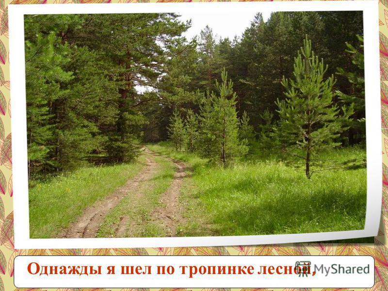 Однажды я шел по тропинке лесной,