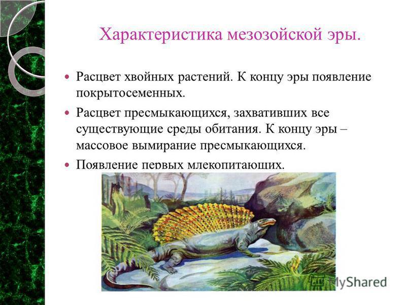 Характеристика мезозойской эры. Расцвет хвойных растений. К концу эры появление покрытосеменных. Расцвет пресмыкающихся, захвативших все существующие среды обитания. К концу эры – массовое вымирание пресмыкающихся. Появление первых млекопитающих. /