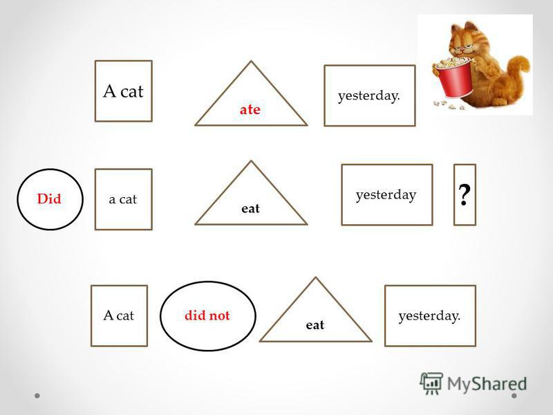 ate A cat yesterday. a cat eat yesterday yesterday. Did did not eat A cat ?