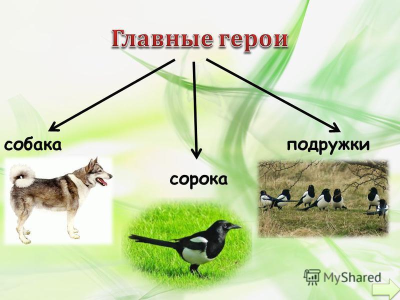 собака сорока подружки