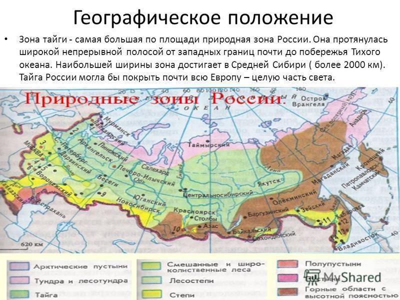 Географическое положение Зона тайги - самая большая по площади природная зона России. Она протянулась широкой непрерывной полосой от западных границ почти до побережья Тихого океана. Наибольшей ширины зона достигает в Средней Сибири ( более 2000 км).