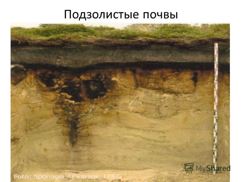 Подзолистые почвы