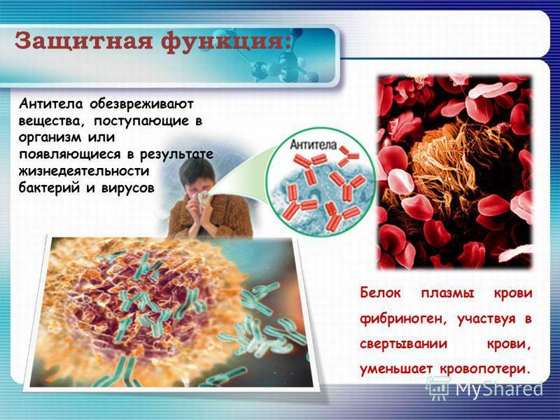 Защитная функция: Белок плазмы крови фибриноген, участвуя в свертывании крови, уменьшает кровопотери. Антитела обезвреживают вещества, поступающие в организм или появляющиеся в результате жизнедеятельности бактерий и вирусов