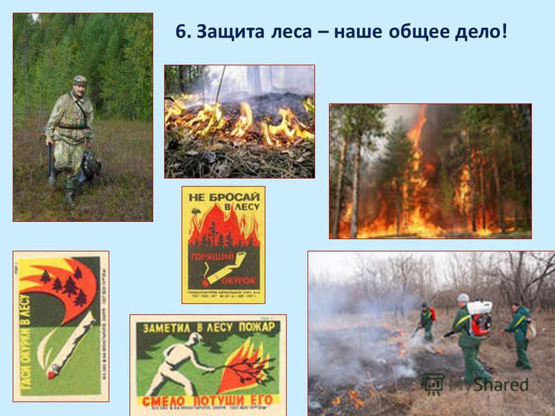 6. Защита леса – наше общее дело!