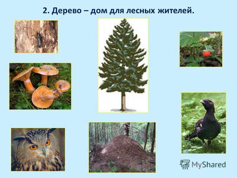 2. Дерево – дом для лесных жителей.