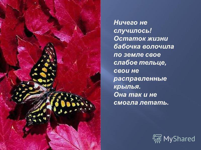 Ничего не случилось! Остаток жизни бабочка волочила по земле свое слабое тельце, свои не расправленные крылья. Она так и не смогла летать.