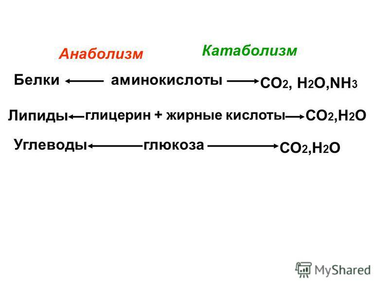 аминокислоты глицерин + жирные кислоты глюкоза Белки Липиды Углеводы СО 2, Н 2 О,NH 3 СО 2,Н 2 О Анаболизм Катаболизм