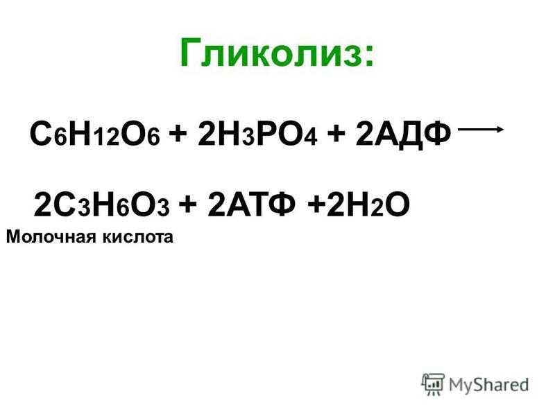 Гликолиз: С 6 Н 12 О 6 + 2Н 3 РО 4 + 2АДФ 2С 3 Н 6 О 3 + 2АТФ +2Н 2 О Молочная кислота
