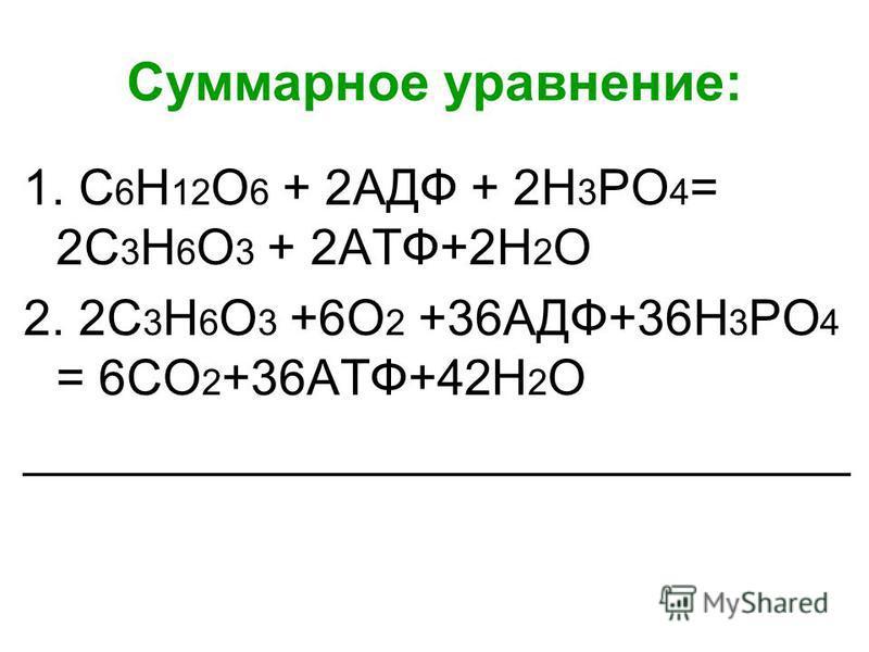 Суммарное уравнение: 1. С 6 Н 12 О 6 + 2АДФ + 2Н 3 РО 4 = 2С 3 Н 6 О 3 + 2АТФ+2Н 2 О 2. 2С 3 Н 6 О 3 +6О 2 +36АДФ+36Н 3 РО 4 = 6СО 2 +36АТФ+42Н 2 О ______________________________