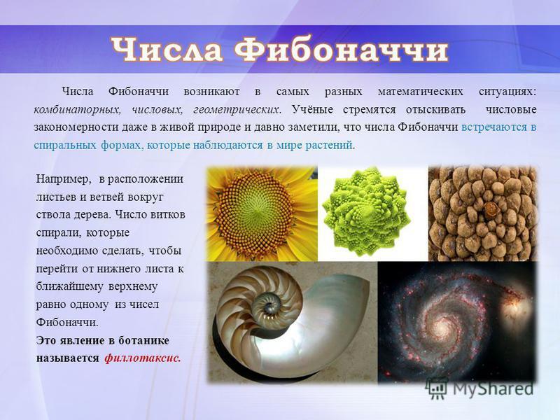 Числа Фибоначчи возникают в самых разных математических ситуациях: комбинаторных, числовых, геометрических. Учёные стремятся отыскивать числовые закономерности даже в живой природе и давно заметили, что числа Фибоначчи встречаются в спиральных формах