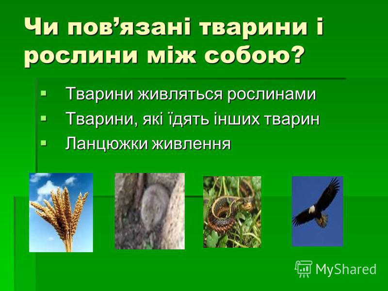 Чи повязані тварини і рослини між собою? Тварини живляться рослинами Тварини живляться рослинами Тварини, які їдять інших тварин Тварини, які їдять інших тварин Ланцюжки живлення Ланцюжки живлення