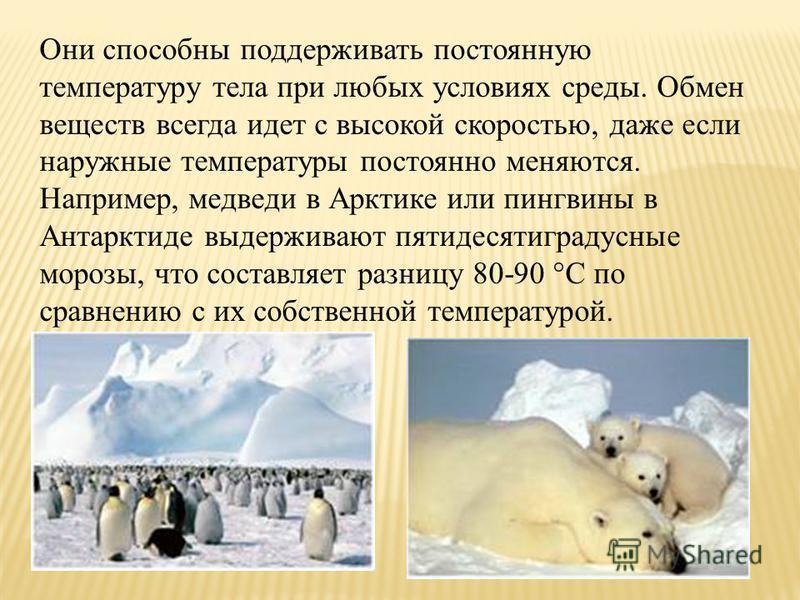 Они способны поддерживать постоянную температуру тела при любых условиях среды. Обмен веществ всегда идет с высокой скоростью, даже если наружные температуры постоянно меняются. Например, медведи в Арктике или пингвины в Антарктиде выдерживают пятиде