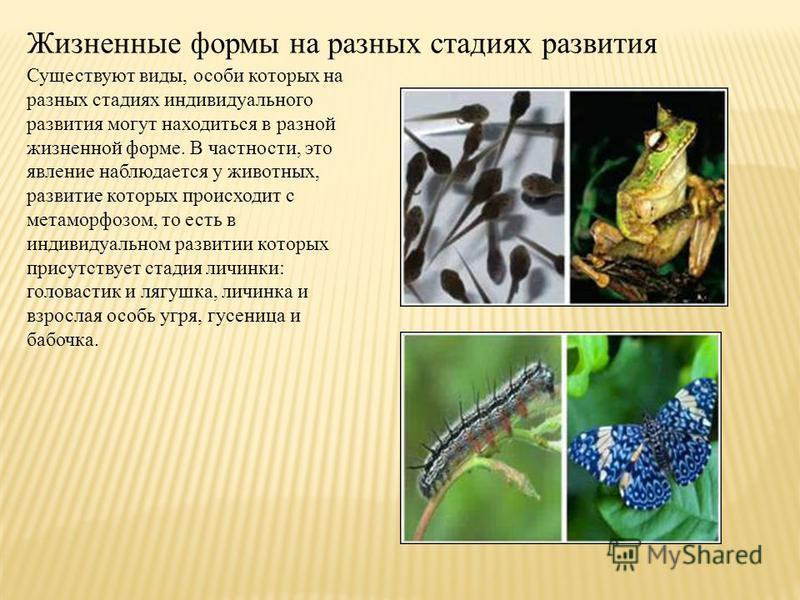 Жизненные формы на разных стадиях развития Существуют виды, особи которых на разных стадиях индивидуального развития могут находиться в разной жизненной форме. В частности, это явление наблюдается у животных, развитие которых происходит с метаморфозо