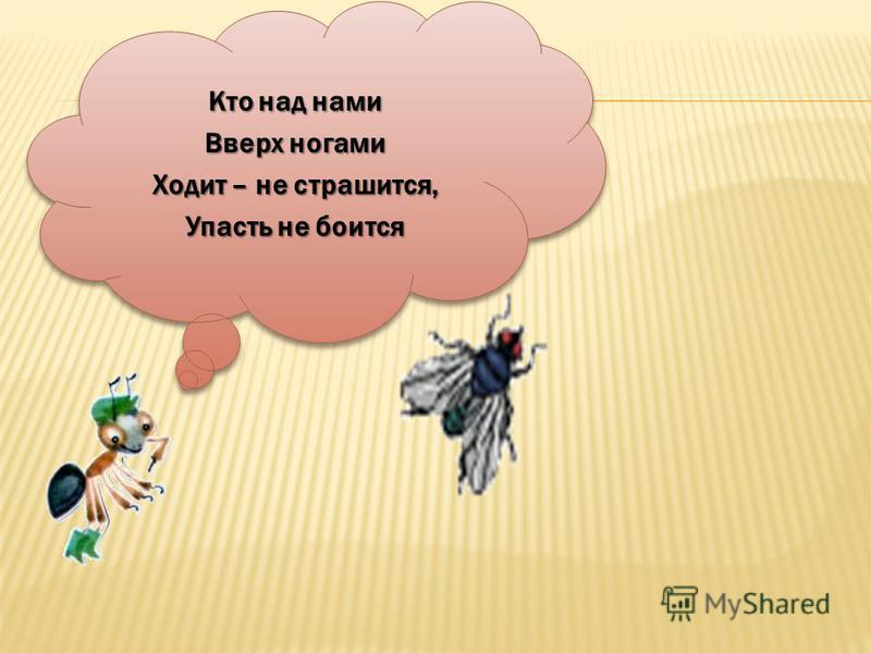Кто над нами Вверх ногами Ходит – не страшится, Упасть не боится Кто над нами Вверх ногами Ходит – не страшится, Упасть не боится