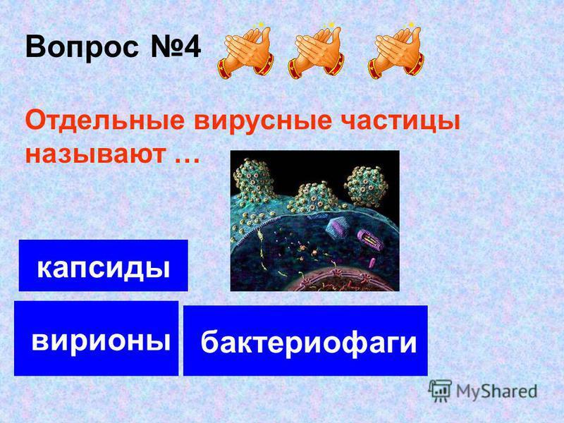 Вопрос 4 вирионы капсиды бактериофаги Отдельные вирусные частицы называют …