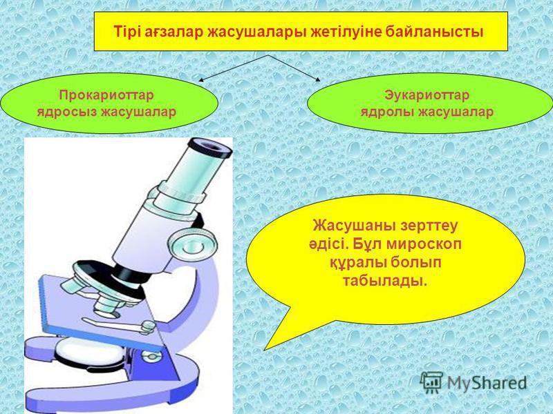 Тірі ағзалар жасушалары жетілуіне байланысты Прокариоттар ядросыз жасушалар Эукариоттар ядролы жасушалар Жасушаны зерттеу әдісі. Бұл мироскоп құралы болып табылады.