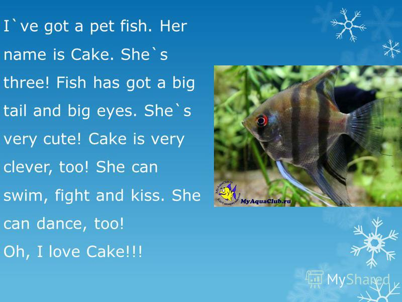 I`ve got a pet fish. Her name is Cake. She`s three! Fish has got a big tail and big eyes. She`s very cute! Cake is very clever, too! She can swim, fight and kiss. She can dance, too! Oh, I love Cake!!!