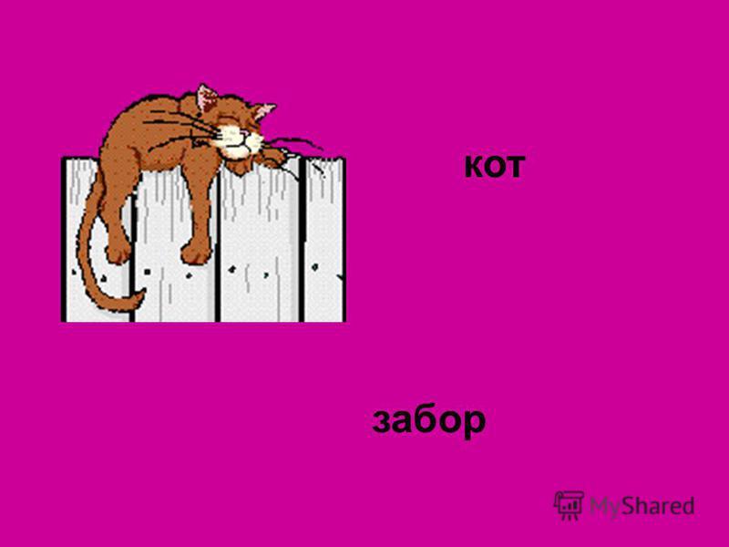кот забор