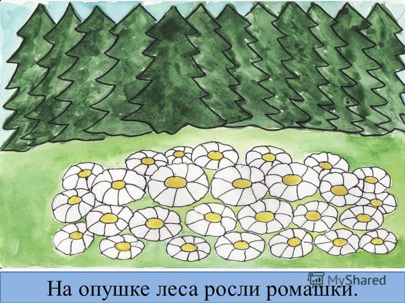 На опушке леса росли ромашки.