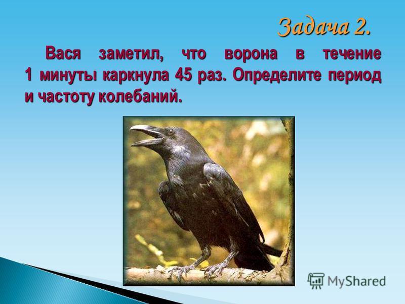 Вася заметил, что ворона в течение 1 минуты каркнула 45 раз. Определите период и частоту колебаний. Задача 2.