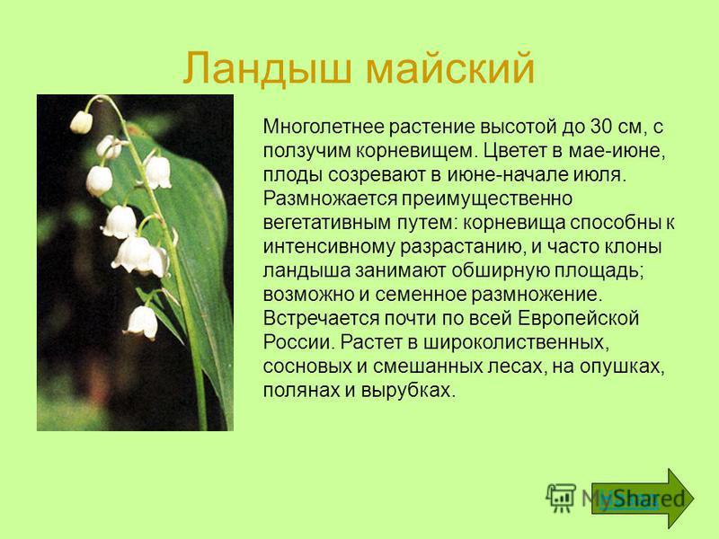 Ландыш майский Назад Многолетнее растение высотой до 30 см, с ползучим корневищем. Цветет в мае-июне, плоды созревают в июне-начале июля. Размножается преимущественно вегетативным путем: корневища способны к интенсивному разрастанию, и часто клоны